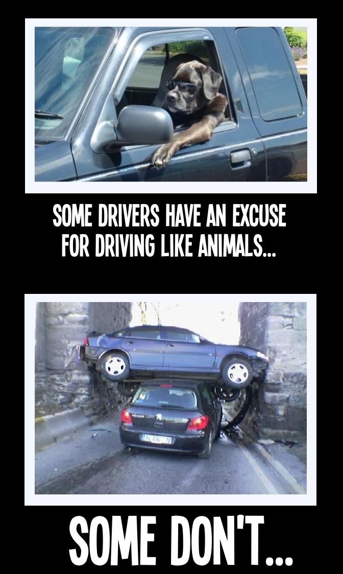 Reckless Driving Behavior